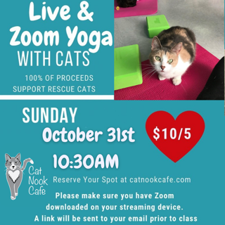 Yoga with Cats (Zoom and In-Person)